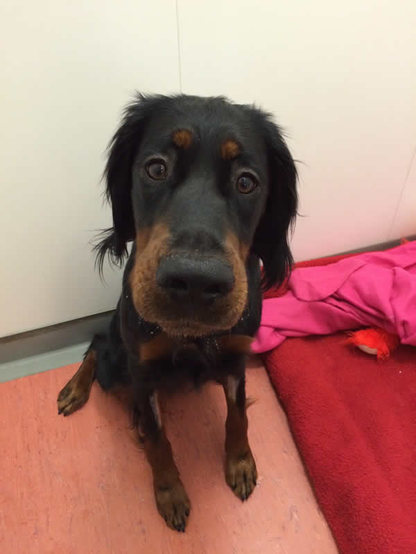 dog at Bicester Vets called Bizzie who had tetanus