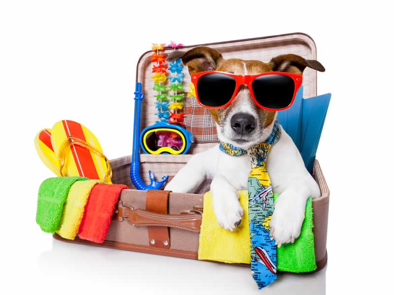 dog on holiday with sunglasses