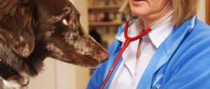dog_stethoscope-1-300x128