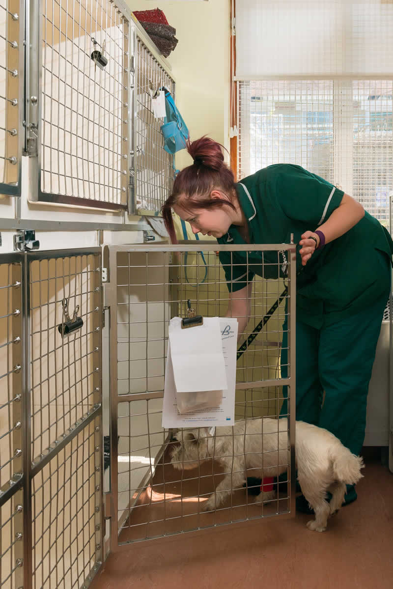 vet nurse at kennels Bicester Vets