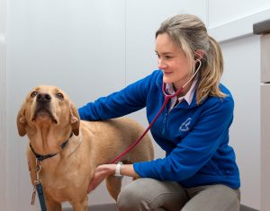 vet consulting with dog at Bicester Vets