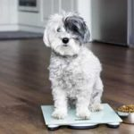dog on scales and dog food