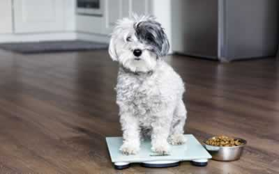 Top Tips for Pet Weight Loss