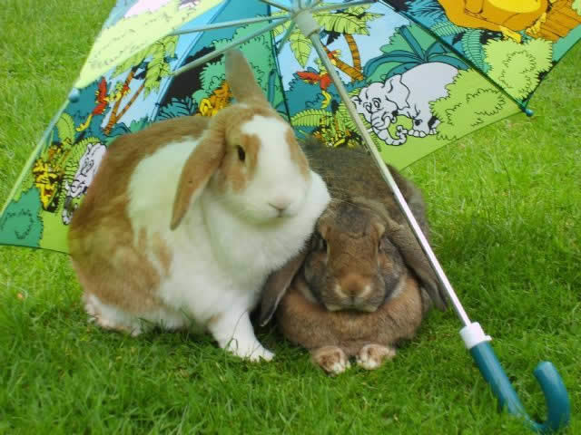 rabbits under umbrella at Bicester Vets