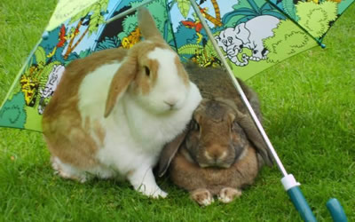 Summer Advice for Pet Rabbits