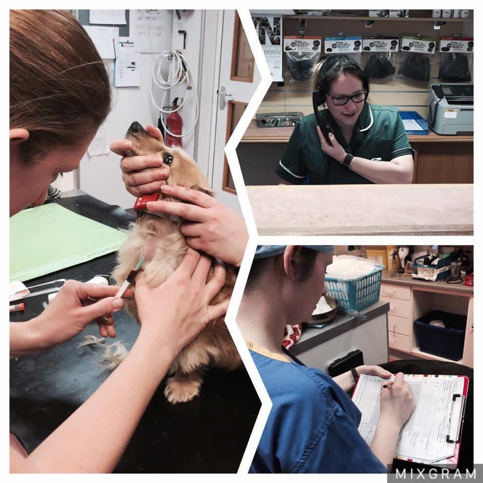 vet nurses bicester vets