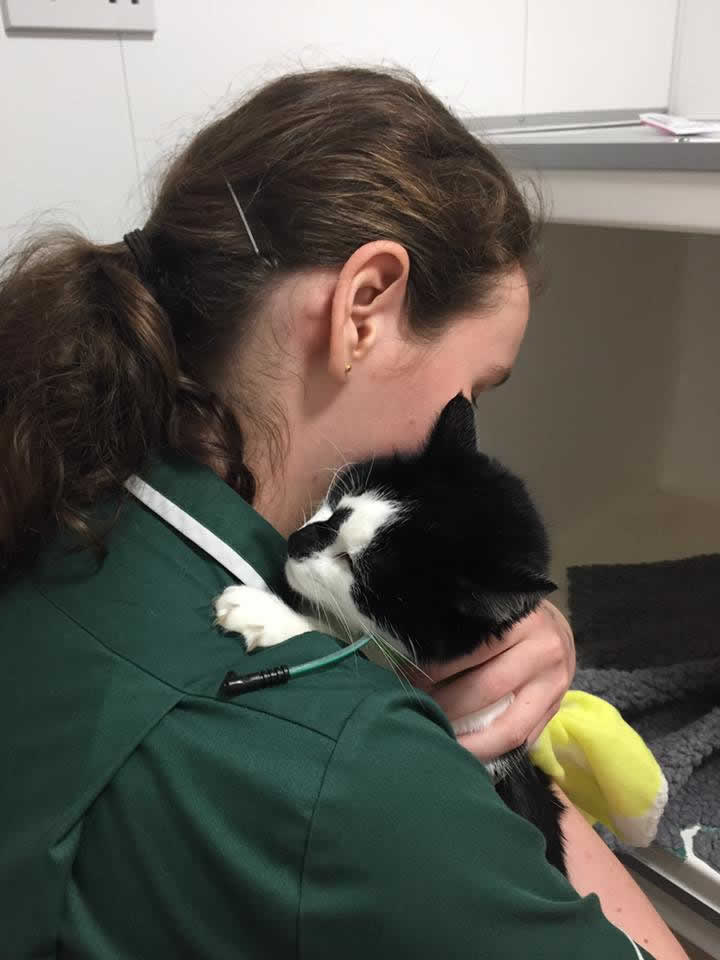 cat Jilly being hugged by nurse at Bicester Vets