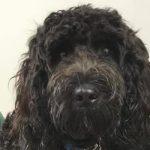 dog Harvey at Bicester Vets