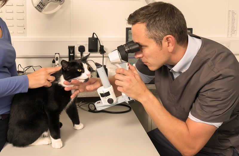 Mike Rhodes eye specialist Bicester vets