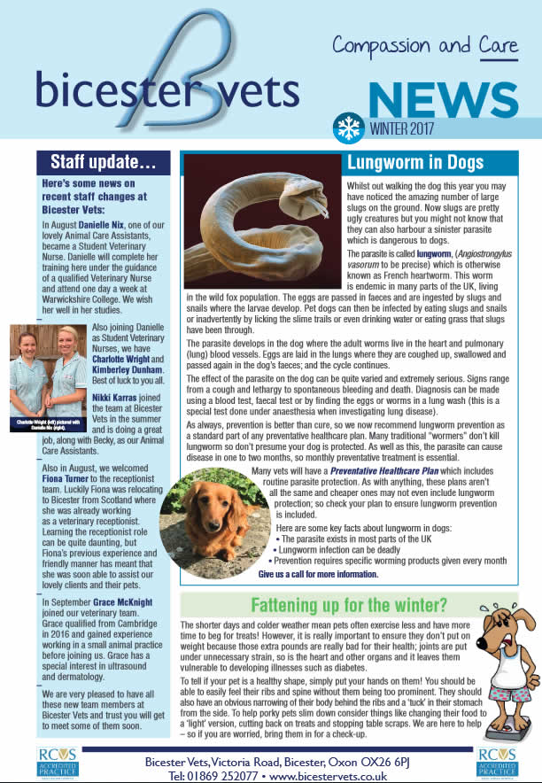 Winter Newsletter Bicester vets