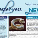 Bicester vets newsletter