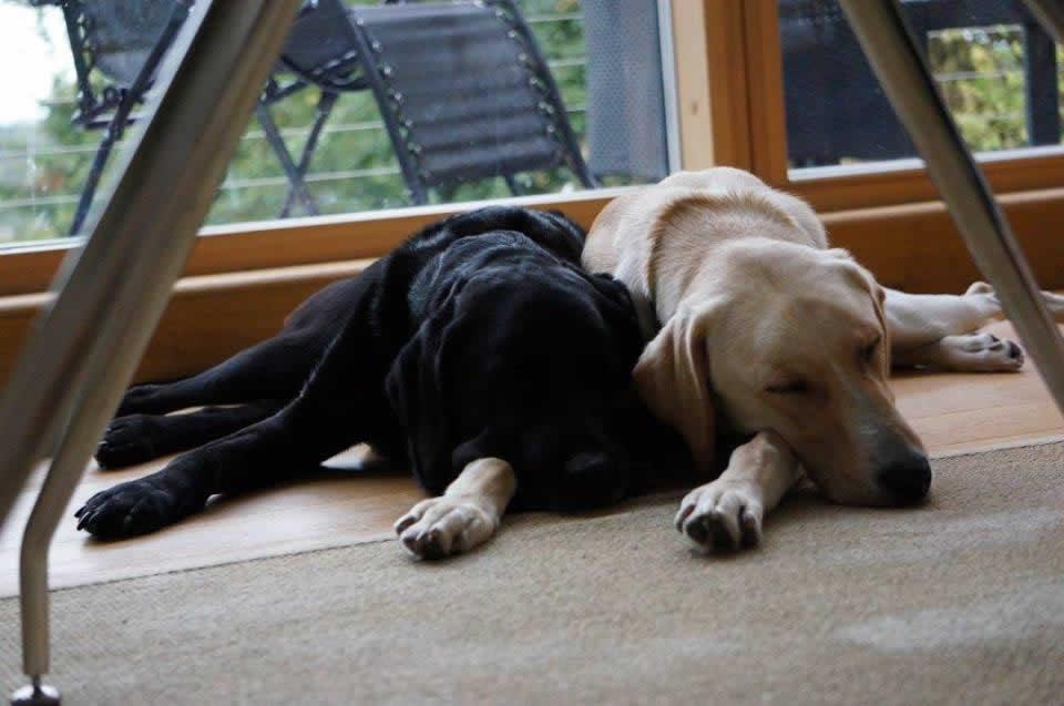 Dog Bo Bicester vets