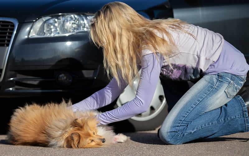 dog road traffic accident bicester