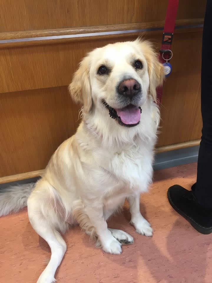 Dog blood donor at Bicester vets