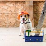 builder dog Bicester vets