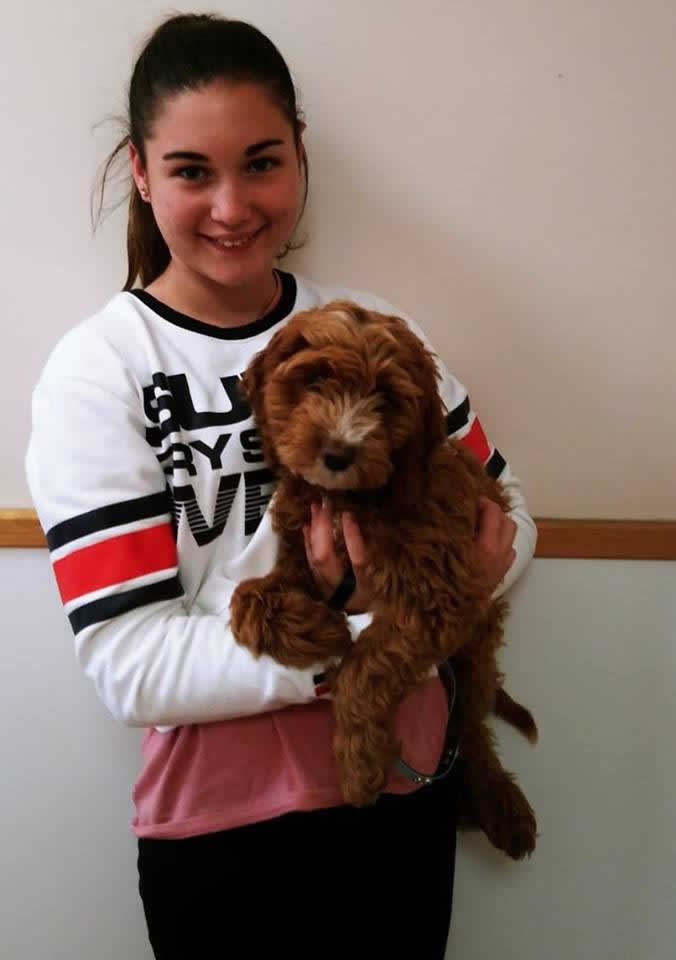 Dog Bailey with owner at Bicester vets