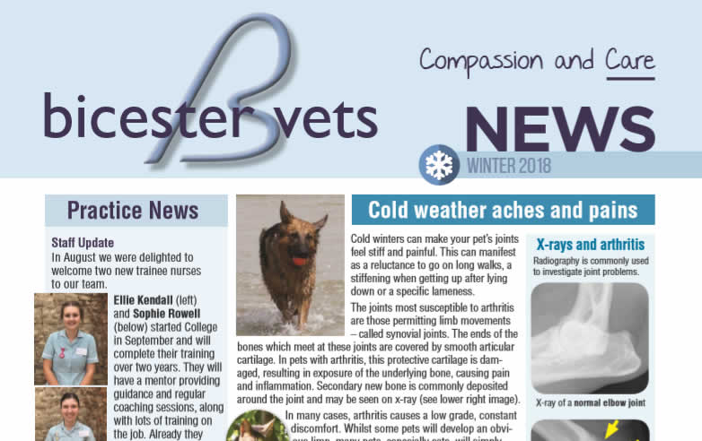 Autumn newsletter at Bicester vets