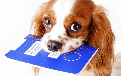 Pet Travel to Europe Post Brexit