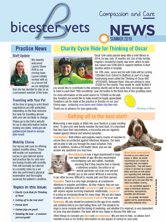 Bicester Vets Summer newsletter