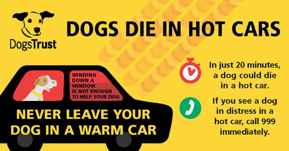 dogs trust hot weather