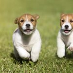 running puppies Bicester Vets