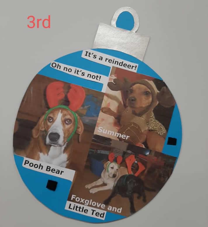 Bicester vets advent calendar of pets