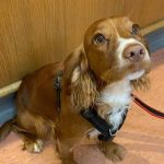 dog at Bicester vets