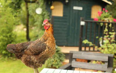 Avian influenza (bird flu): Latest situation